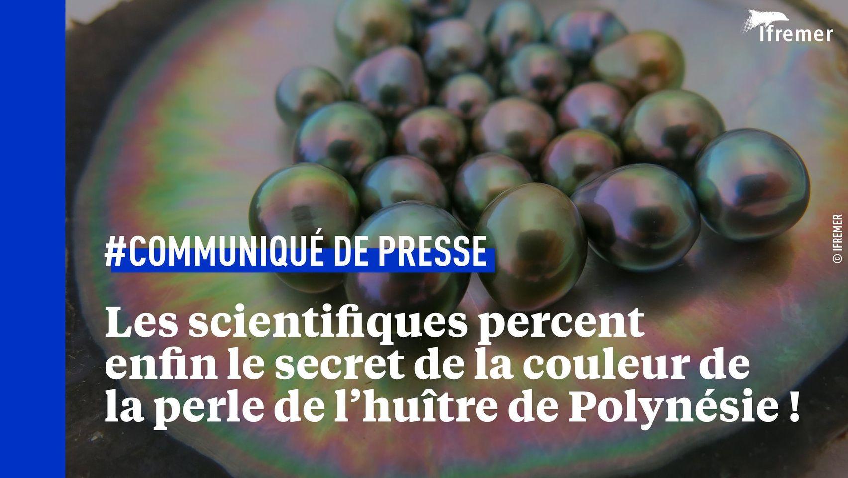 Les scientifiques décodent la couleur des perles de culture de Tahiti