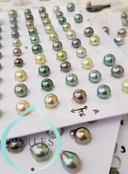 Perles nues de Rikitea Gambier